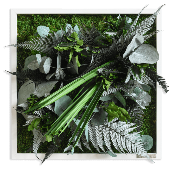 plant pictures with jungle design 35x35cm solid wood frame (white)