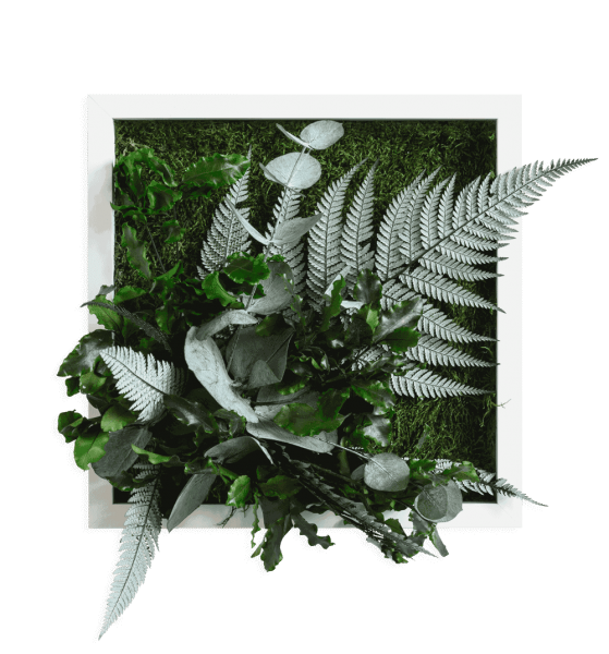 plant pictures with jungle design 22x22cm solid wood frame (white)