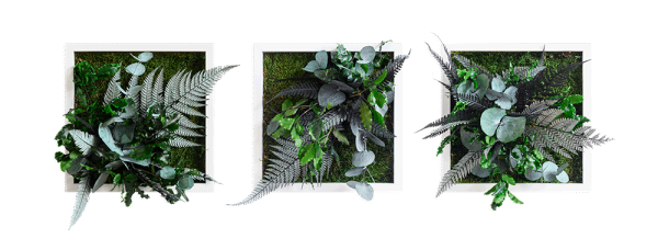 plant pictures with jungle design 22x22cm 3 pack solid wood frame (white)