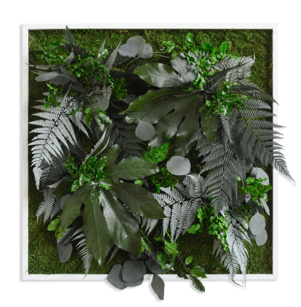 plant pictures with jungle design 55x55cm solid wood frame (white)